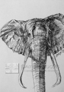Elephant-Ink-Sketch-Watermarked