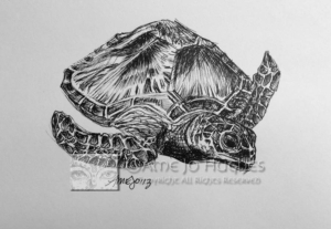 Green-Sea-Turtle-Sketch-Watermarked